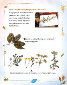Seni Membuat Herbarium (sample 2)